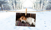 istock cute photo of dog on string in winter 913475212