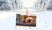 istock cute photo of dog on string in winter 913476512
