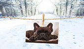 istock cute photo of dog on string in winter 913480964
