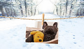 istock cute photo of dog on string in winter 920516578