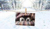 istock cute photo of dogs on string in winter 913481260