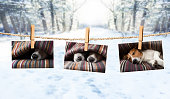istock cute photos of dogs on string in winter 913476086