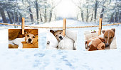 istock cute photos of dogs on string in winter 920518868