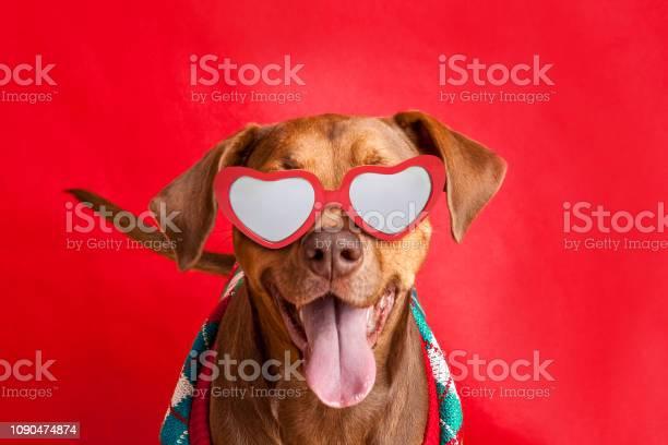 Cute pit bull dog in sweater and heart glasses picture id1090474874?b=1&k=6&m=1090474874&s=612x612&h=1jzhv6orn5ugralrxxw5b1jq8qrrhvobmao5juuufgs=
