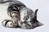 Cute playful cat, selective focus