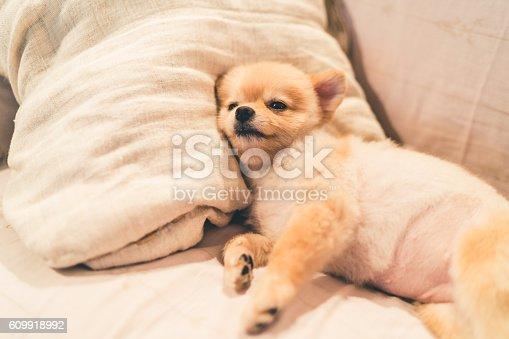 istock Cute pomeranian dog sleeping on pillow on bed 609918992