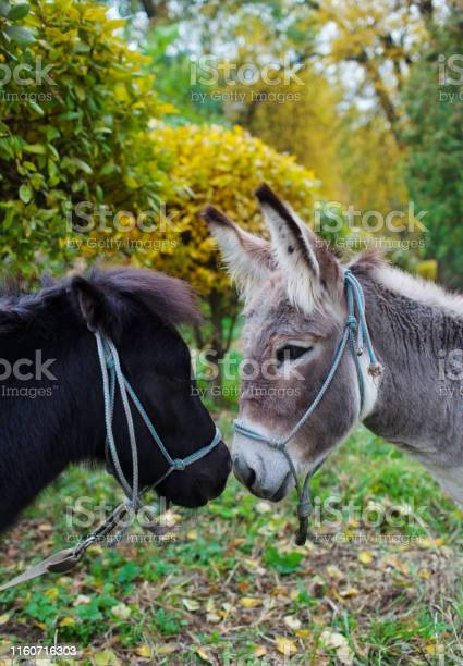 Photo of Cute pony and donkey at natural park,enjoying nice weather,life is good