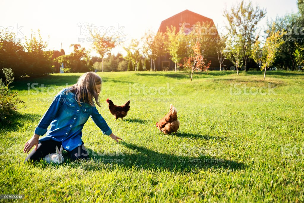 Cute preteen girl with rabbit and chicken near the barn in spring. stock photo