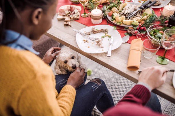 Cute Puddle Waiting For Leftovers Under Table Cute Puddle Waiting For African Woman To Give It Leftovers Under Table On Christmas Eve leftovers stock pictures, royalty-free photos & images