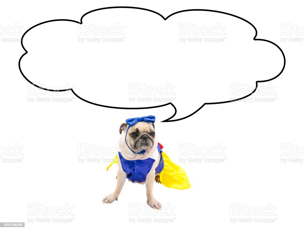 Cute Pug Dog with the empty cloud bubble above her head, isolated on...