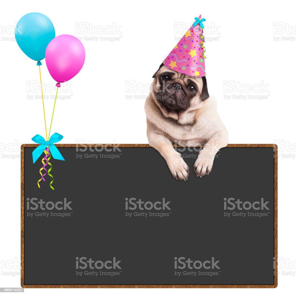 schattig pug puppy hondje opknoping met paws op leeg schoolbord teken met ballonnen en roze feest hoed, het dragen op witte achtergrond foto