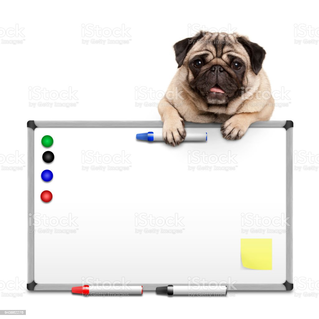 Cute Pug Puppy Dog Hanging With Paws On Blank Marker White