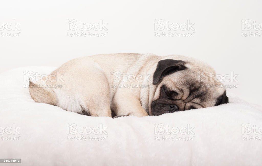 schattig pug puppy hondje slapen op deken foto