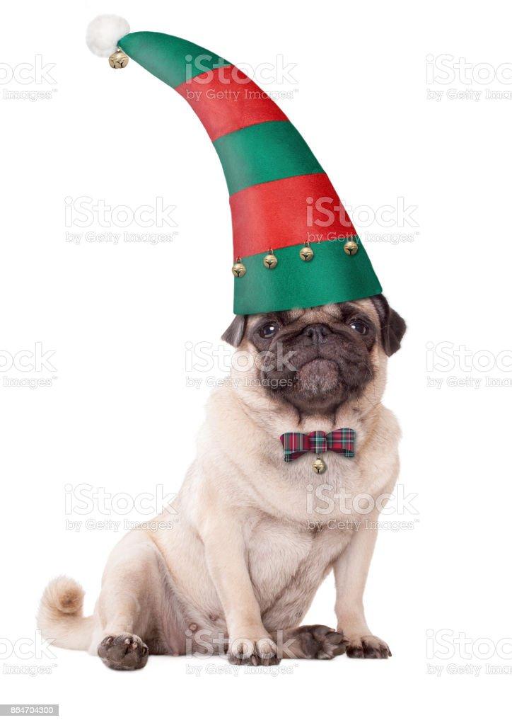 schattige Mops pup hond het dragen van elf hoed voor Kerstmis foto