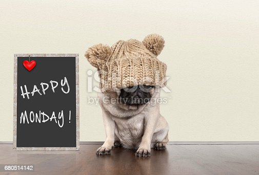 istock cute pug puppy dog with bad monday morning mood, sitting next to blackboard sign with text happy monday withcopy space 680514142