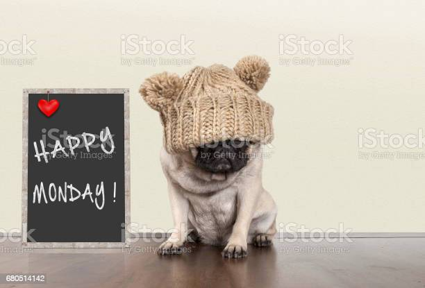 Cute pug puppy dog with bad monday morning mood sitting next to sign picture id680514142?b=1&k=6&m=680514142&s=612x612&h=fugmnf7whbrbcnfr logkug0aw026esxkkovd5vkmxe=