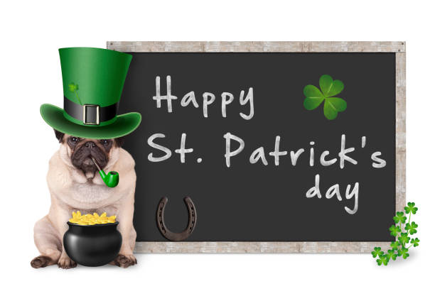 cute pug puppy dog with leprechaun hat for st. patrick's day smoking pipe, sitting next to blank blackboard sign with horseshoe and shamrock - happy st. patricks day stock photos and pictures