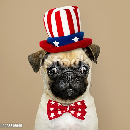 istock Cute Pug puppy in a Uncle Sam hat and bow tie 1128816946