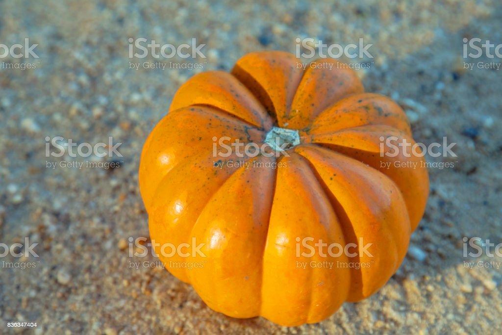 Cute Pumpkins At Yellow Sand Seasonal Pumpkins Outdoors