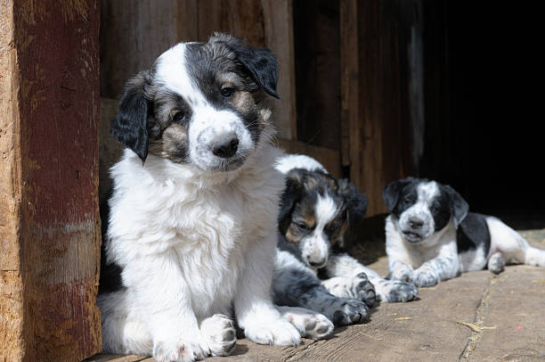 Cute Puppies stock photo