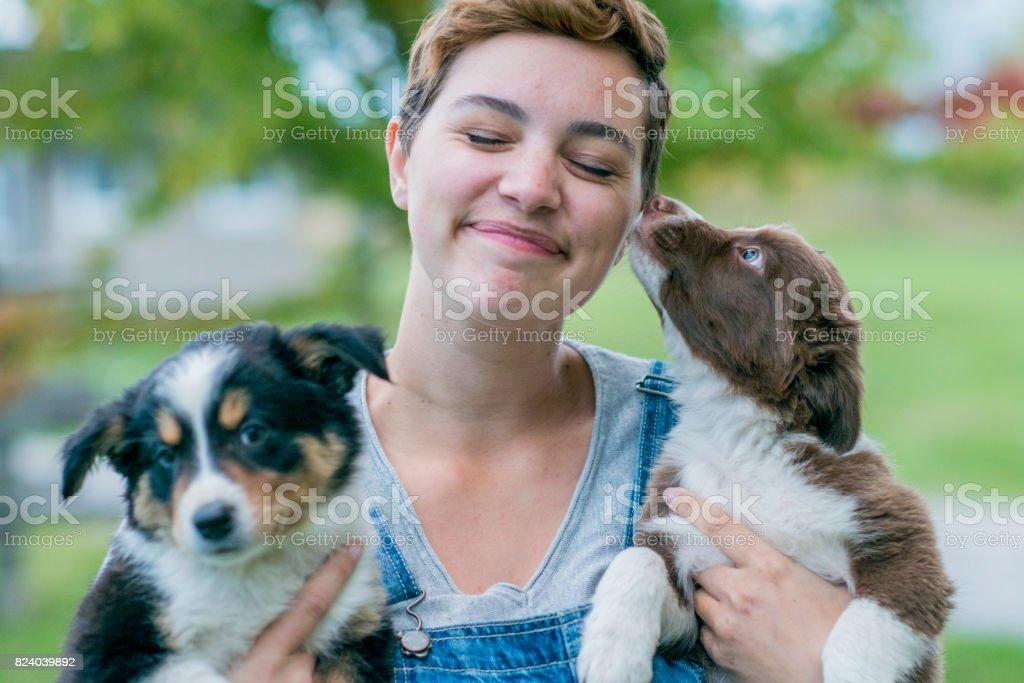 Linda Puppies - foto de stock