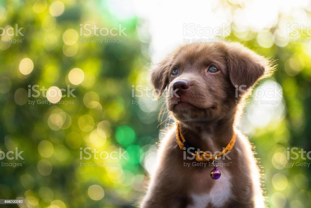 Niedlichen Welpen, 2018 Hund Jahr Hintergrund – Foto