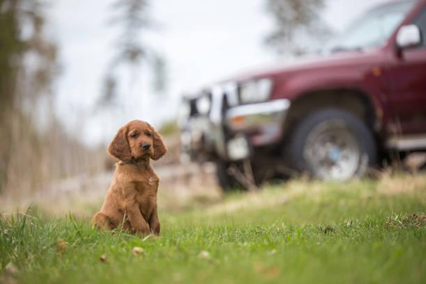 Cute puppy and car picture id944733452?b=1&k=6&m=944733452&s=612x612&w=0&h=ljou7jiglfsilu6s2jbglgvxpsfwf7u5fn0iayqldha=