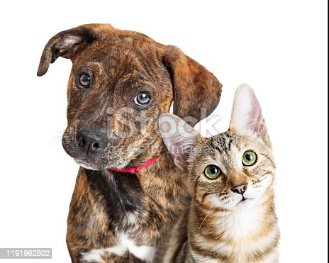 Cute young kitten and puppy together looking at camera with attentive expressions. Closeup over white