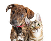 istock Cute Puppy and Kitten Closeup Looking at Camera 1191962502