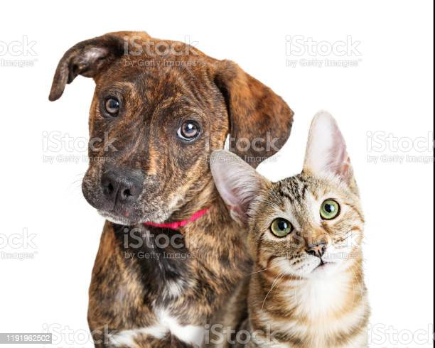 Cute puppy and kitten closeup looking at camera picture id1191962502?b=1&k=6&m=1191962502&s=612x612&h=o1lptjh7mt6h0tjambm8syf1dquwrozl2vj5ix6wjpg=