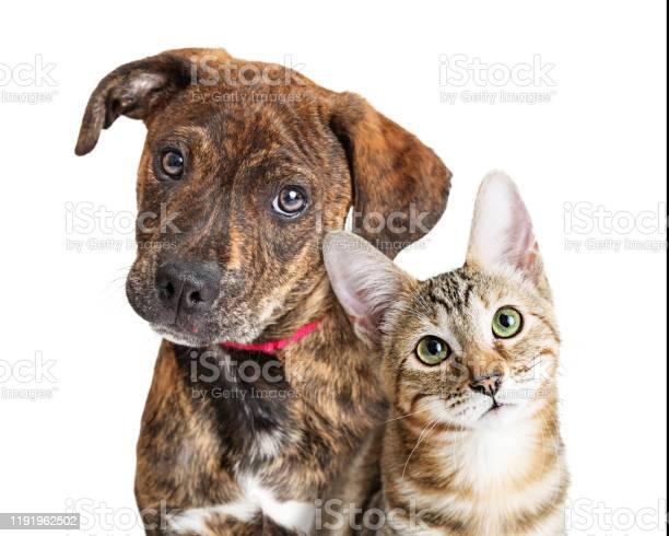 Cute puppy and kitten closeup looking at camera picture id1191962502?b=1&k=6&m=1191962502&s=612x612&h=o1lptjh7mt6h0tjambm8syf1dquwrozl2vj5ix6wjpg=