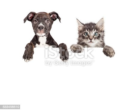 istock Cute Puppy And Kitten Hanging Over White Banner 533458510
