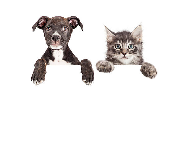 Cute Puppy And Kitten Hanging Over White Banner stock photo