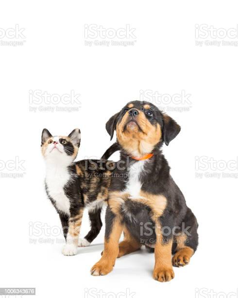 Cute puppy and kitten looking up into copy space picture id1006343676?b=1&k=6&m=1006343676&s=612x612&h=jtzdlnq xobiatfon0rsrgjan2f89p5h29qnhodmbsu=