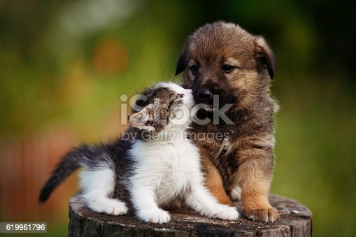 istock cute puppy and kitten on the grass outdoor; 619961796