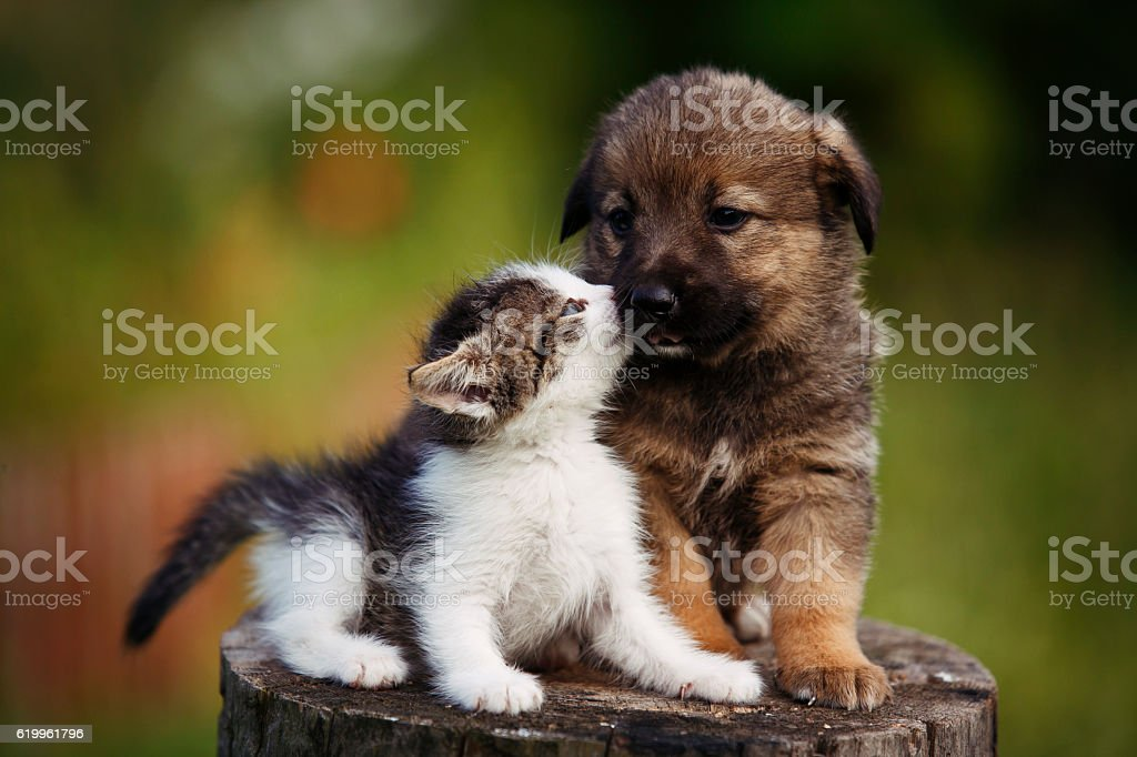 cute puppy and kitten on the grass outdoor; – Foto