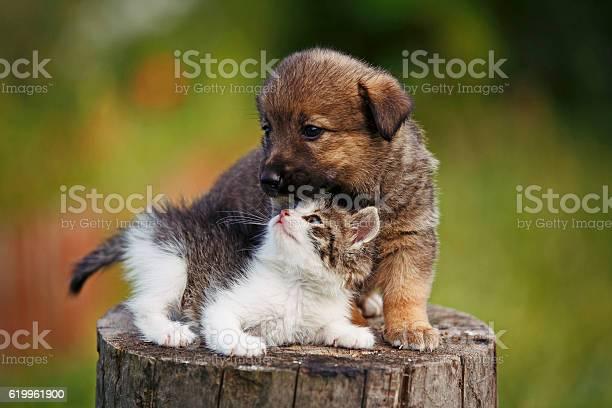 Cute puppy and kitten on the grass outdoor picture id619961900?b=1&k=6&m=619961900&s=612x612&h=vefi417fzqslvhjnrof ukoaf77vjtkn u e ycxibs=