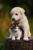 istock cute puppy and kitten on the grass outdoor; 624491864