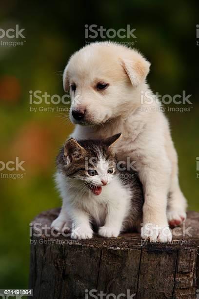 Cute puppy and kitten on the grass outdoor picture id624491864?b=1&k=6&m=624491864&s=612x612&h=h89dkwdmi63u1tqtw8rhg2hurqknjljpa4guqy g gi=