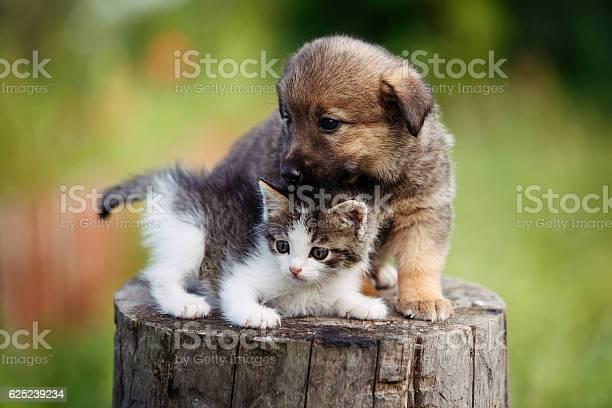 Cute puppy and kitten on the grass outdoor picture id625239234?b=1&k=6&m=625239234&s=612x612&h=ksrgirmzhx2bmvoztv5mjmlnaqsrcxebj2peqlyyanq=