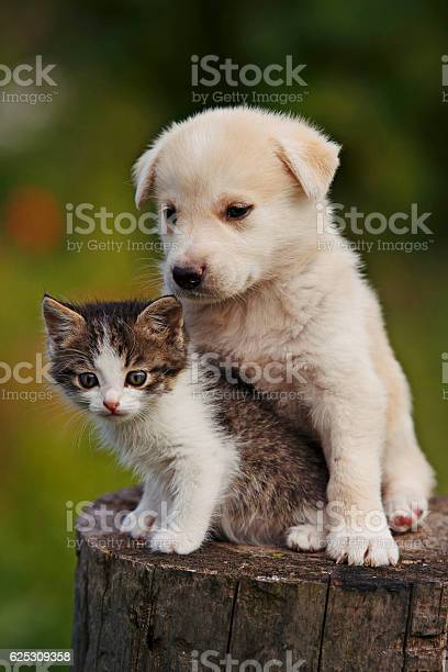 Cute puppy and kitten on the grass outdoor picture id625309358?b=1&k=6&m=625309358&s=612x612&h=28uvqjooyvcgzdgth9vvj3bayhfoobwwgaoh9siqqqa=