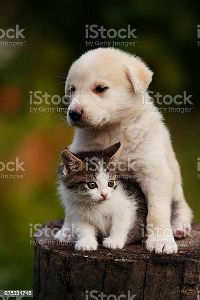 Cute puppy and kitten on the grass outdoor picture id625334748?b=1&k=6&m=625334748&s=612x612&h=dfdfsmkxcvpdz3ahruclqafudogrbi3m7n3n3oskz o=