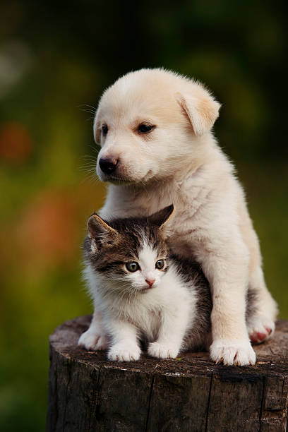 Cute puppy and kitten on the grass outdoor picture id625334748?b=1&k=6&m=625334748&s=612x612&w=0&h=des6if6etob rvvikcba pb71gjvqdbdwmdzr0f5srk=
