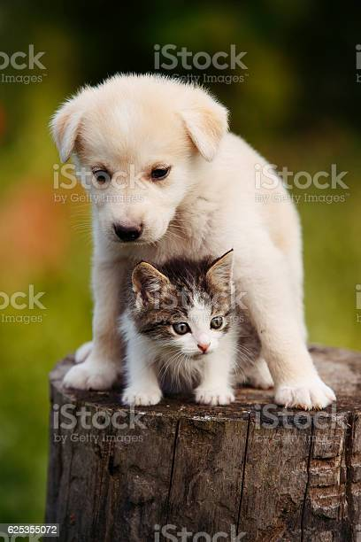 Cute puppy and kitten on the grass outdoor picture id625355072?b=1&k=6&m=625355072&s=612x612&h=sgah5em410h0r6rz341es ccia7ujaykr6puh4prdue=