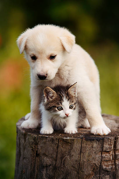 Cute puppy and kitten on the grass outdoor picture id625355072?b=1&k=6&m=625355072&s=612x612&w=0&h=odg7xdjpmapo9badpmsflwgazxgoosw7zmon8s 4yw8=