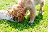 istock Cute puppy and kitten on the grass outdoor 863825916
