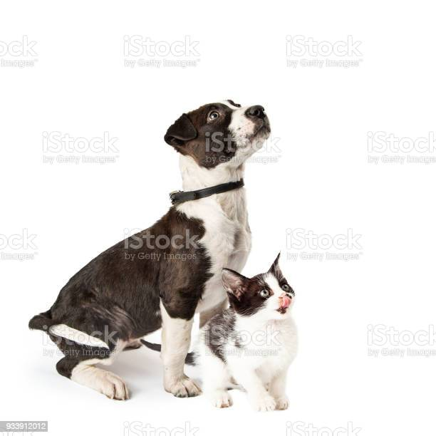 Cute puppy and kitten sitting together looking up picture id933912012?b=1&k=6&m=933912012&s=612x612&h=fgufoe3kd jdnngyfvdcoofctslt7yup  47vts8fka=