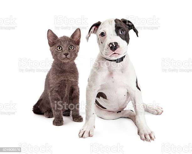 Cute puppy and kitten sitting together picture id524908576?b=1&k=6&m=524908576&s=612x612&h=xr2dssck skv   zh9fbxainvsy zcucesojam6azps=