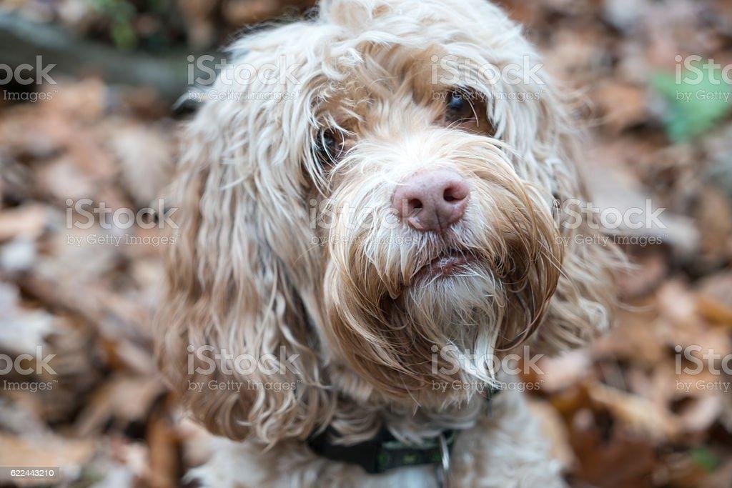 Cute Puppy Autumn Portrait stock photo
