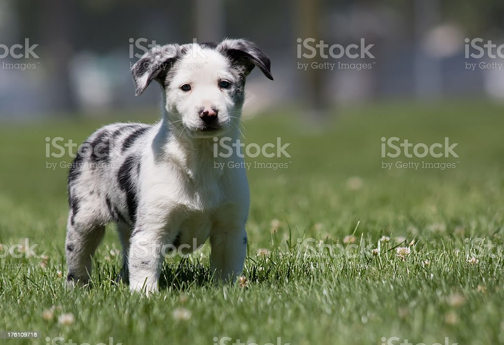 Cute puppy close-up royalty-free stock photo
